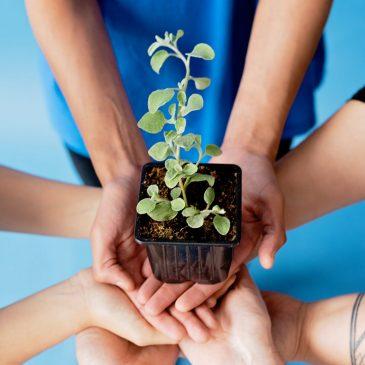 Környezetvédelmi Alap 2021 pályázat